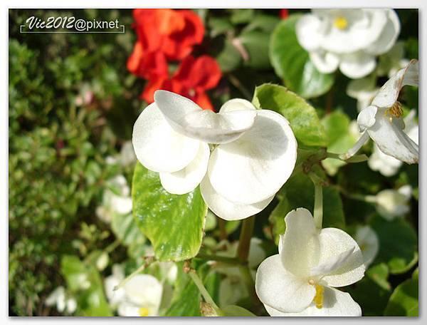 flowershowTP-26.jpg