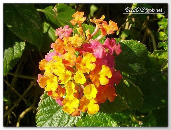 flowershowTP-33.jpg
