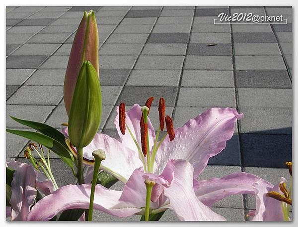 flowershowTP-34.jpg