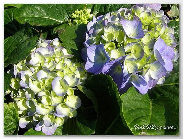 flowershowTP-36.jpg