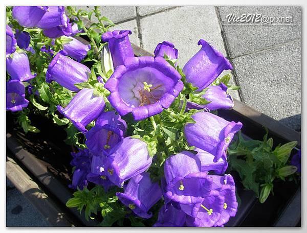 flowershowTP-38.jpg