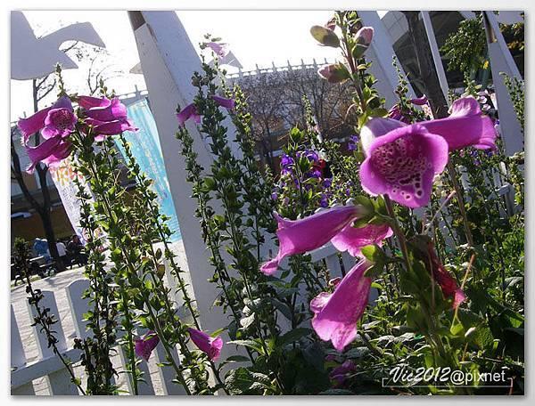 flowershowTP-40.jpg