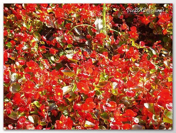flowershowTP-49.jpg