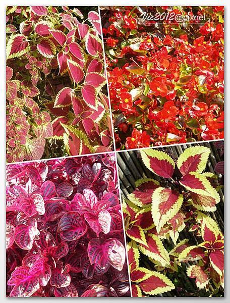 flowershowTP-50.jpg