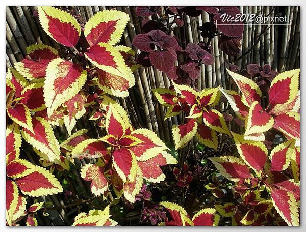 flowershowTP-55.jpg
