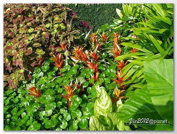 flowershowTP-56.jpg