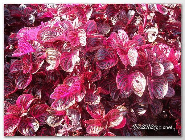 flowershowTP-58.jpg