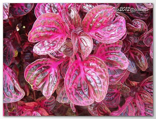 flowershowTP-59.jpg