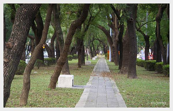 A0013_敦化北叢林步道m960x600.jpg