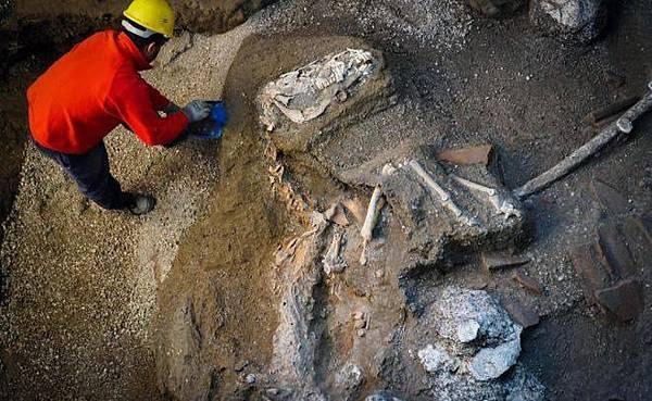 考古團隊宣布在龐貝古城西北方的遺跡「神祕別墅」發現數具穿戴著馬具和青銅飾品的馬匹骸骨.jpg