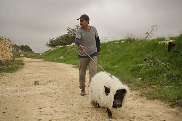 【天外飛來一隻豬】用羊皮小黑豬幽默嘲諷以巴衝突