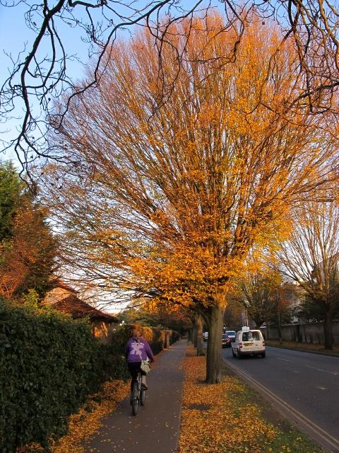 秋天的林蔭道
