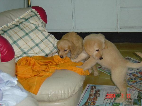妮妮和妹妹在喬宏房間撒野中