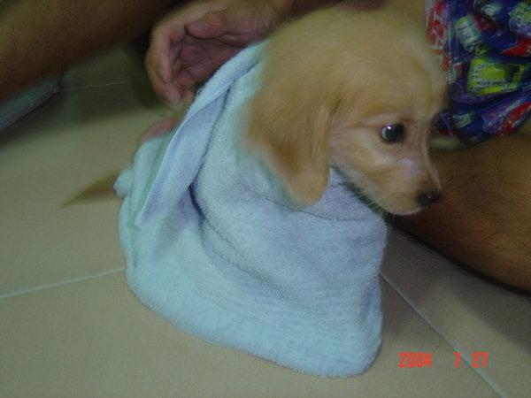 剛洗完澡...比毛巾還小ㄉ妹妹