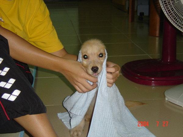 剛洗完澡ㄉ阿拉伯狗