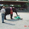 是要大象按摩啊
