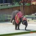 這隻小象超可愛的~