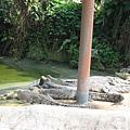 鱷魚>.<