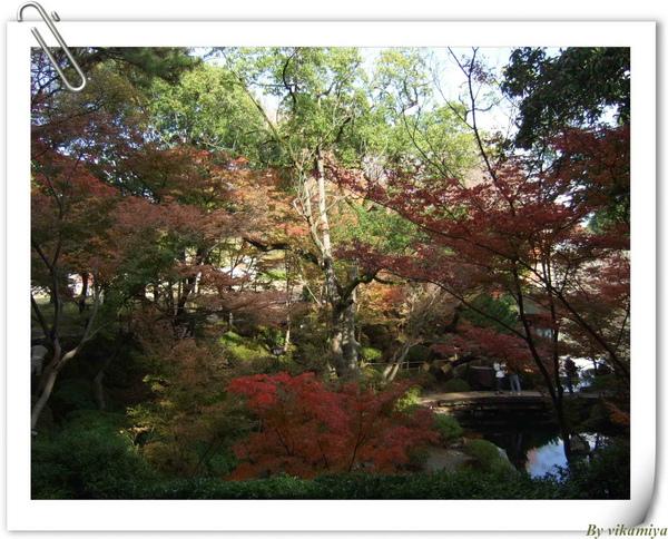 11.25 和歌山紅葉溪庭園1.jpg