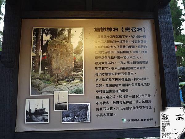 溪頭妖怪村 138.JPG