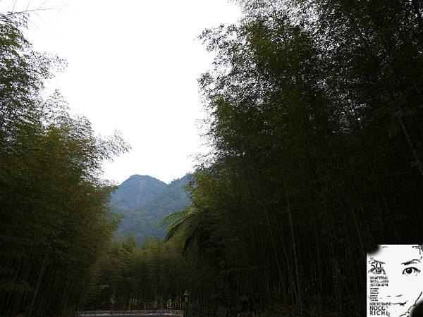 溪頭妖怪村 381