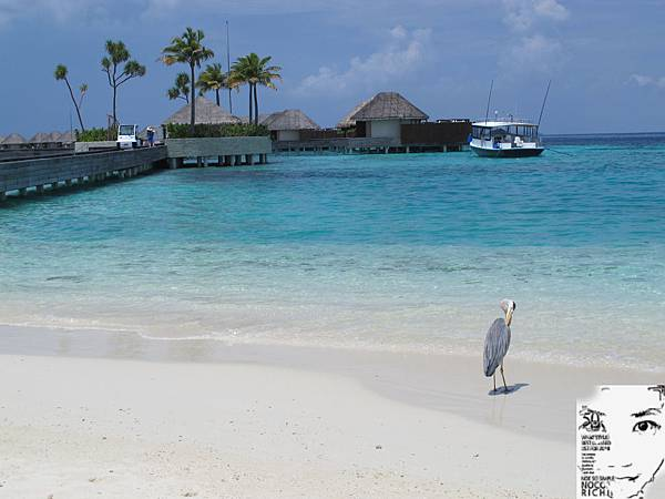 MALDIVES_2 312