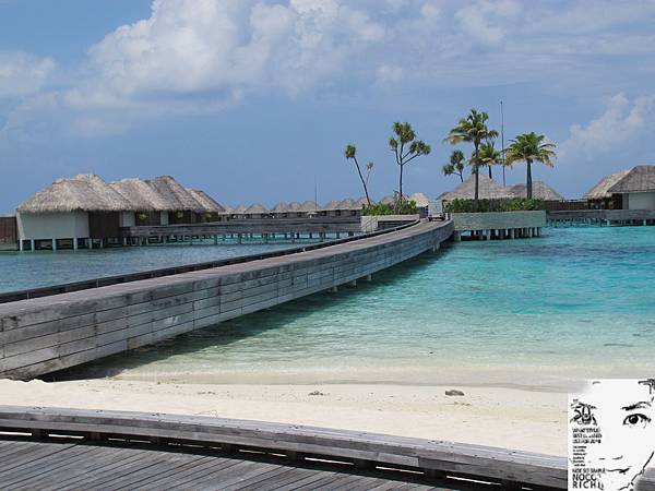MALDIVES_2 315