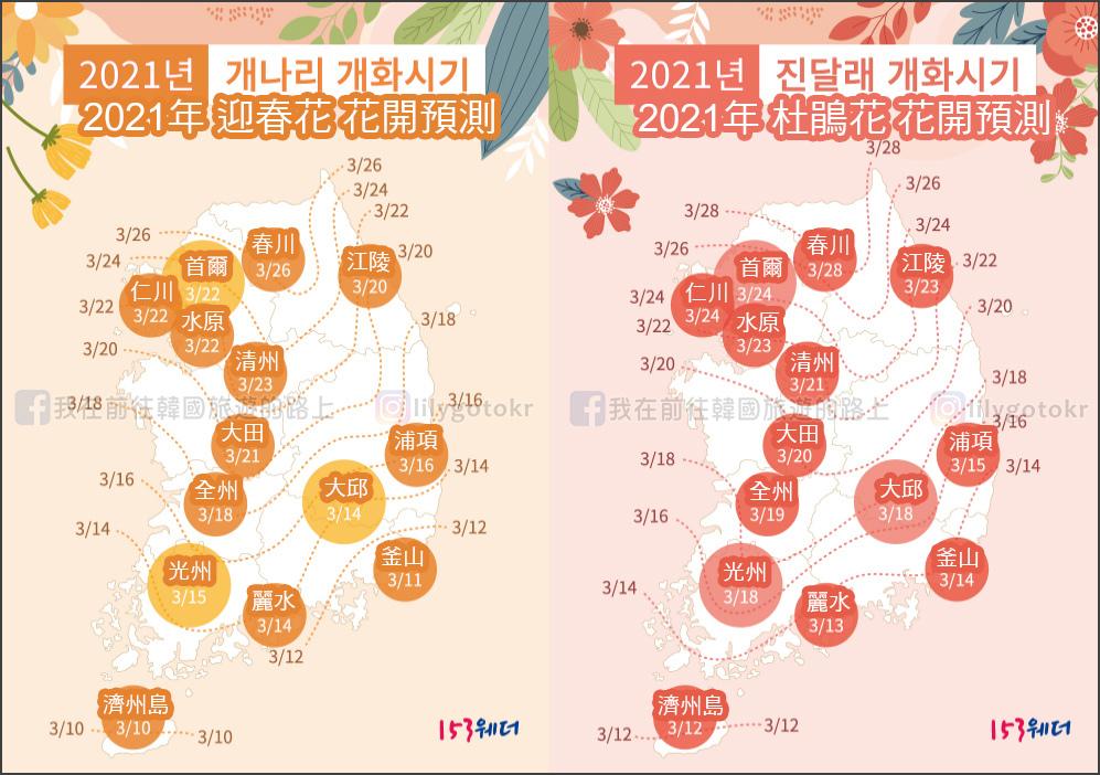 2021韓國迎春花.jpg