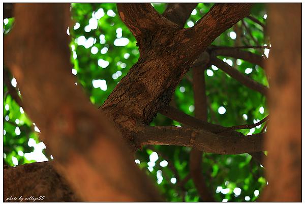 樹葉間隙散景.JPG