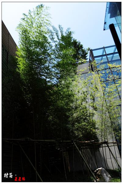 綠竹.JPG