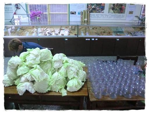 新鮮紫雲產高麗菜-圖片取自紫雲FB