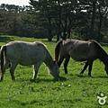 馬放牧地 마방목지0016.jpg