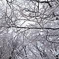 濟州島漢拏山御里牧靈室登山021.jpg