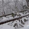 濟州島漢拏山御里牧靈室登山038.jpg