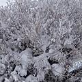 濟州島漢拏山御里牧靈室登山047.jpg