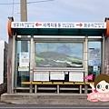 濟州西歸浦山房山油菜花제주 산방산 0003.jpg