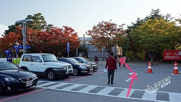 首爾紫芒草慶典서울억새축제天空公園하늘공원0004.jpg