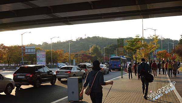 首爾紫芒草慶典서울억새축제天空公園하늘공원0006.jpg