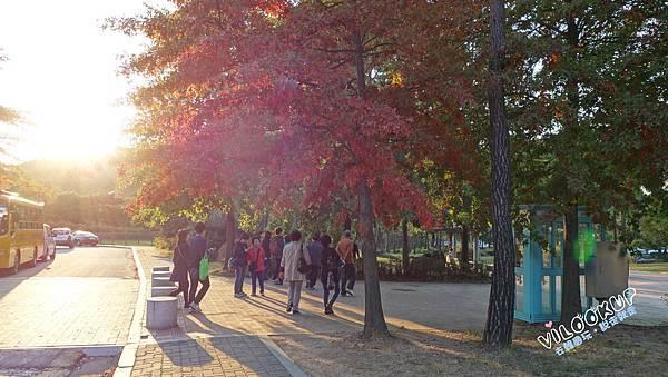 首爾紫芒草慶典서울억새축제天空公園하늘공원0011.jpg