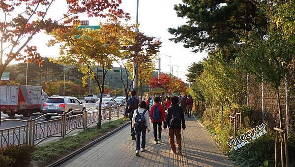 首爾紫芒草慶典서울억새축제天空公園하늘공원0007.jpg