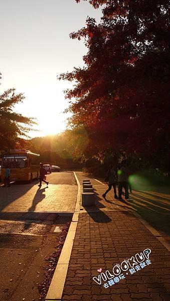 首爾紫芒草慶典서울억새축제天空公園하늘공원0012.jpg