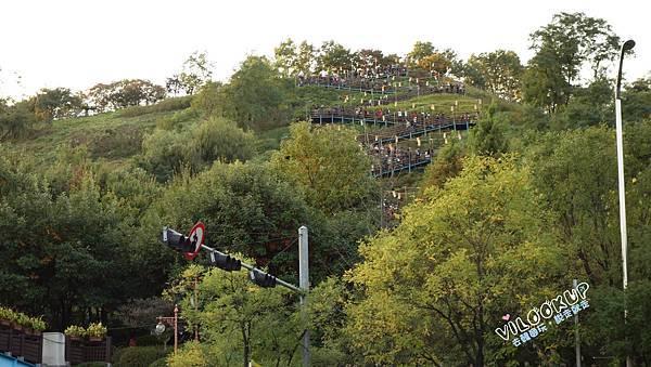 首爾紫芒草慶典서울억새축제天空公園하늘공원0017.jpg