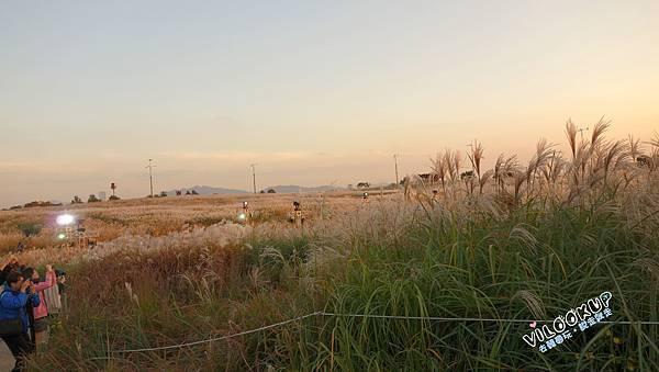 首爾紫芒草慶典서울억새축제天空公園하늘공원0029.jpg
