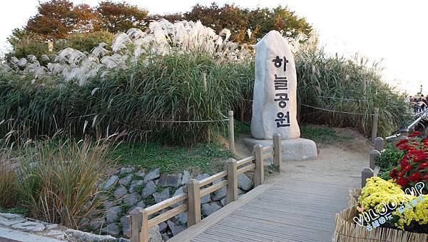 首爾紫芒草慶典서울억새축제天空公園하늘공원0028.jpg