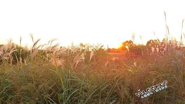 首爾紫芒草慶典서울억새축제天空公園하늘공원0033.jpg