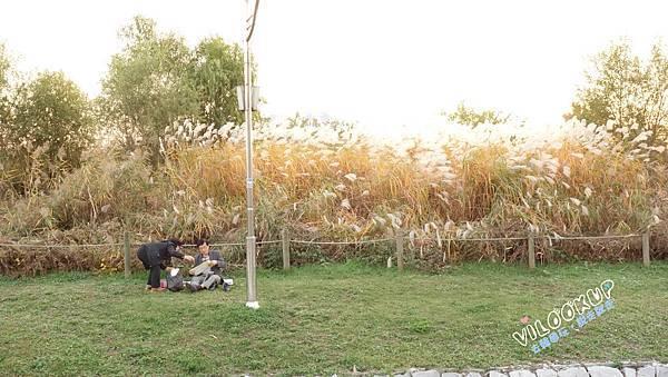 首爾紫芒草慶典서울억새축제天空公園하늘공원0039.jpg