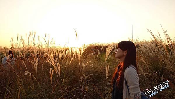 首爾紫芒草慶典서울억새축제天空公園하늘공원0035.jpg
