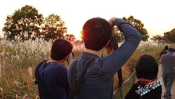首爾紫芒草慶典서울억새축제天空公園하늘공원0041.jpg