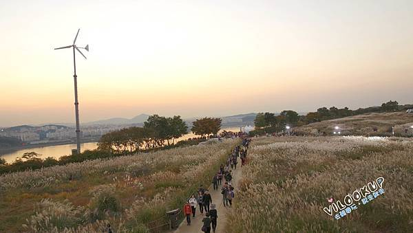 首爾紫芒草慶典서울억새축제天空公園하늘공원0049.jpg