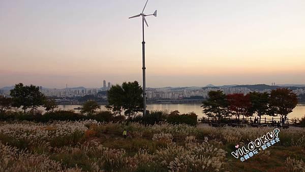 首爾紫芒草慶典서울억새축제天空公園하늘공원0053.jpg
